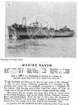 Marine Raven